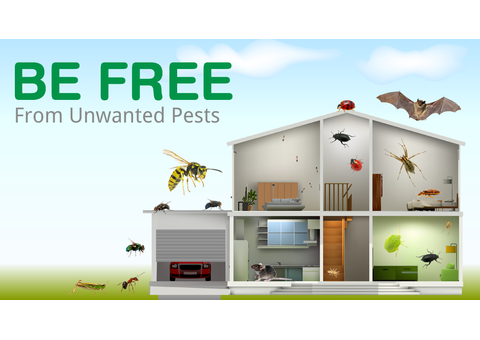 JUMEIRAH PEST CONTROL AND CLEANING SERVICES