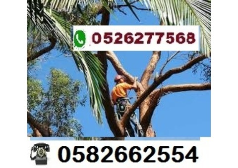 Palm Tree Removal and Disposal Services in UAE  0526277568