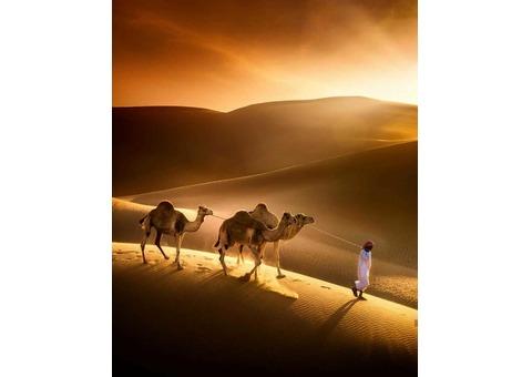 AL THIQAH & AL AMAN TOURS