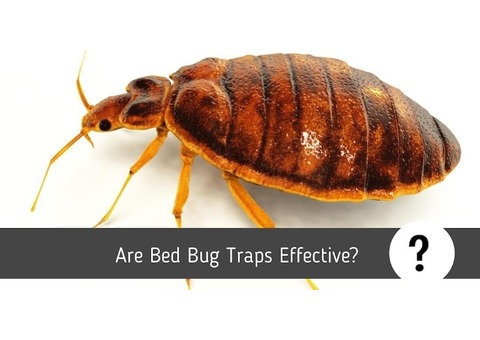 No 1 Pest Control Company UAE - 8 Yrs Experience – Starting 150 AED