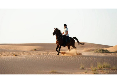 Dubai Desert Horse Riding